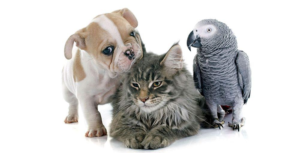 pet food high quality